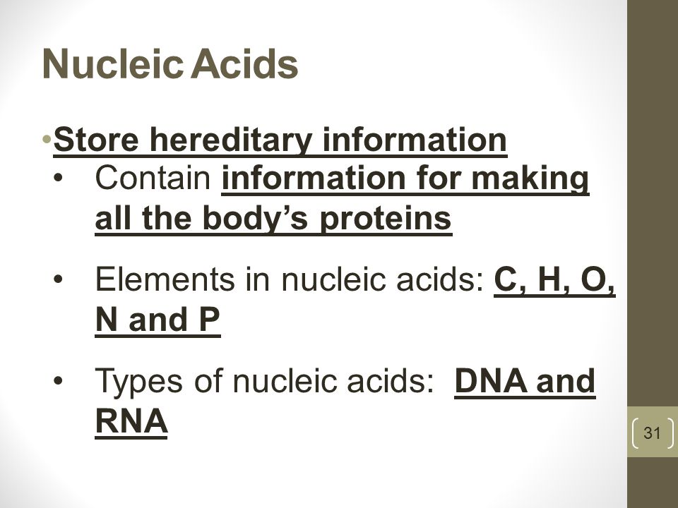 Nucleic Acids Store hereditary information