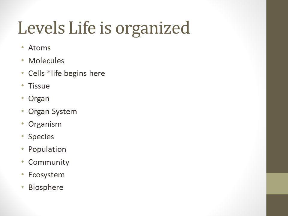 Levels Life is organized