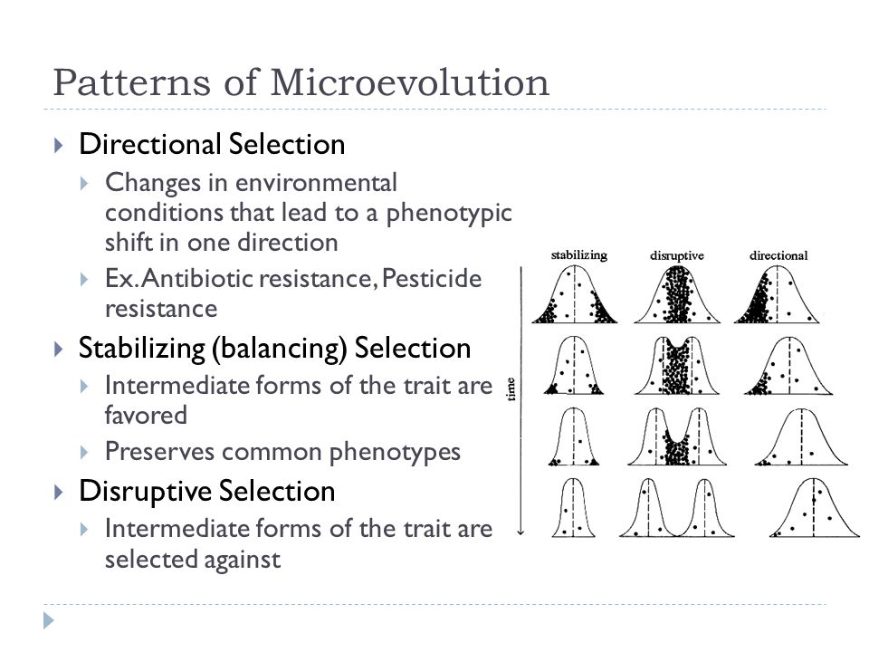 Patterns of Microevolution
