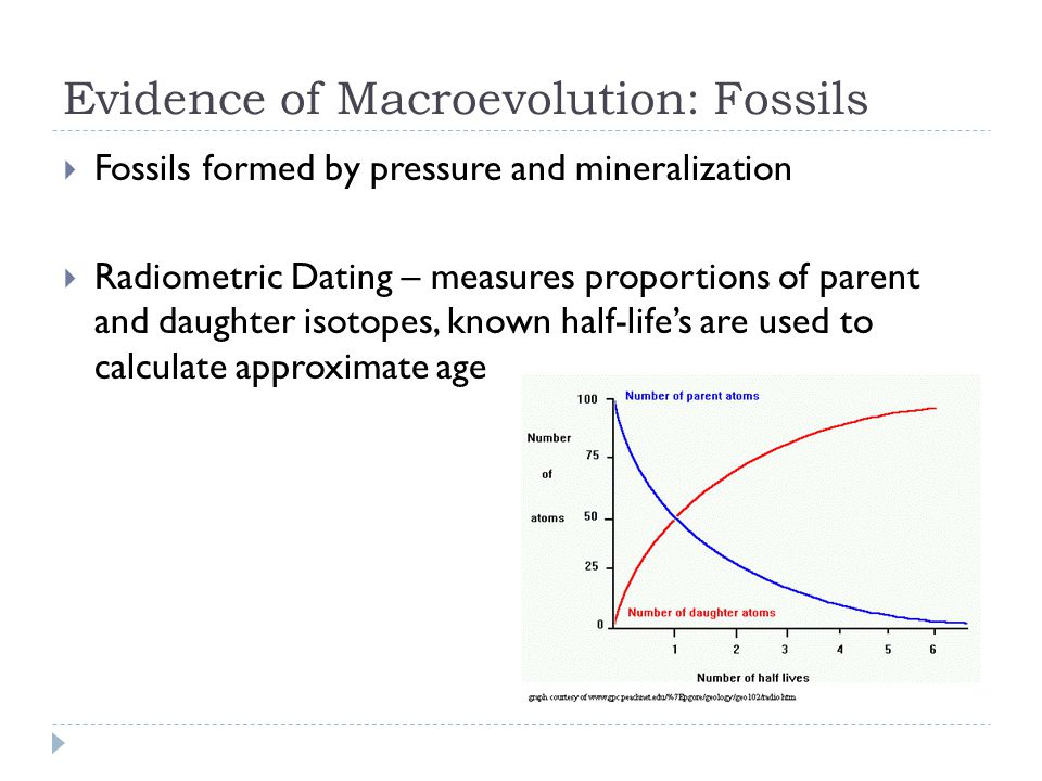 Evidence of Macroevolution: Fossils