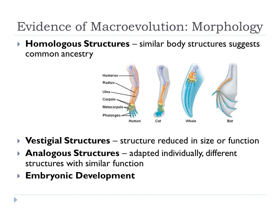 Evidence of Macroevolution: Morphology