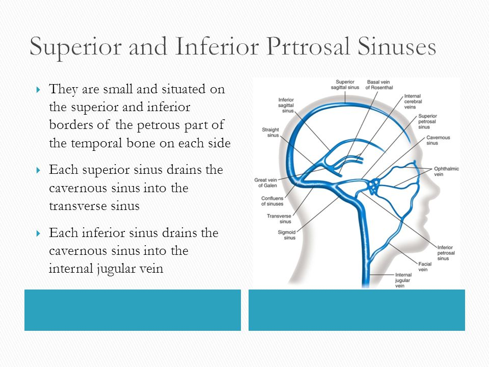 Superior and Inferior Prtrosal Sinuses