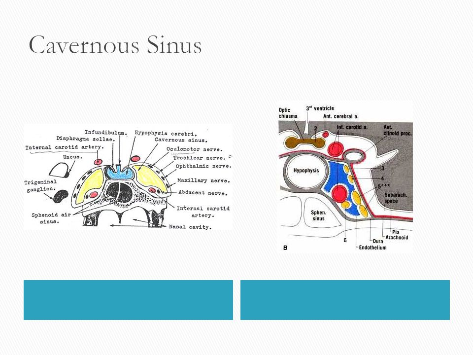 Meninges of Brain and Spinal Cord Lecture: ppt video ...
