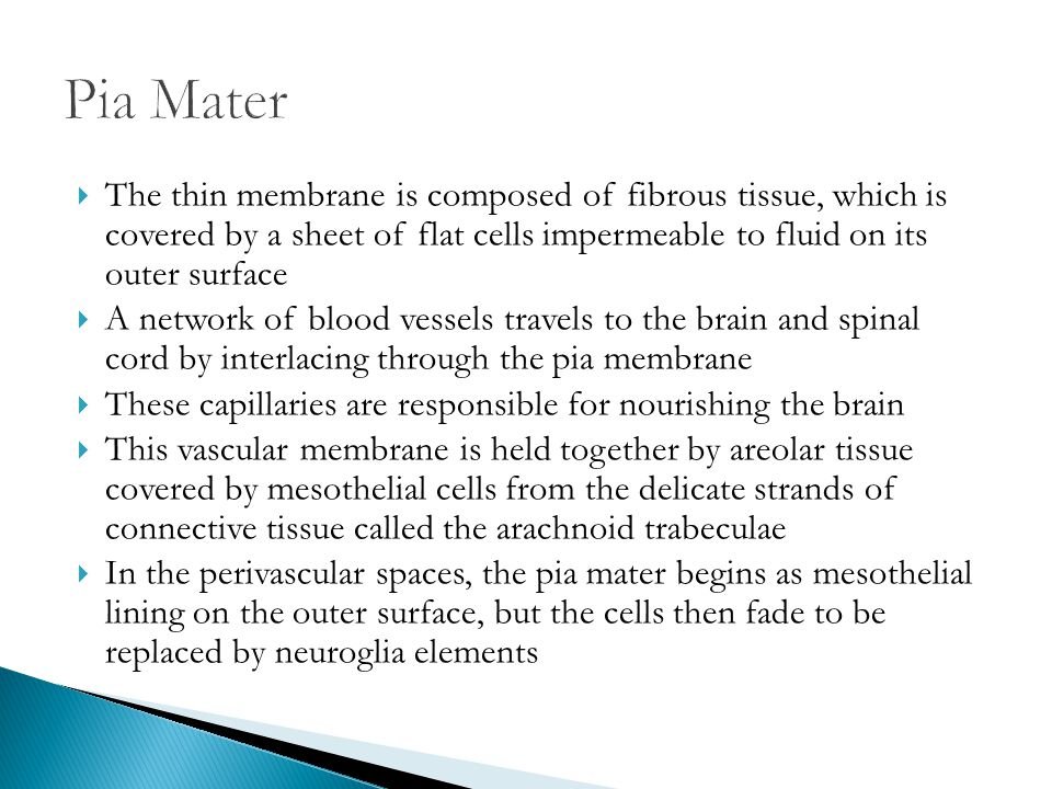 Pia Mater The thin membrane is composed of fibrous tissue, which is covered by a sheet of flat cells impermeable to fluid on its outer surface.