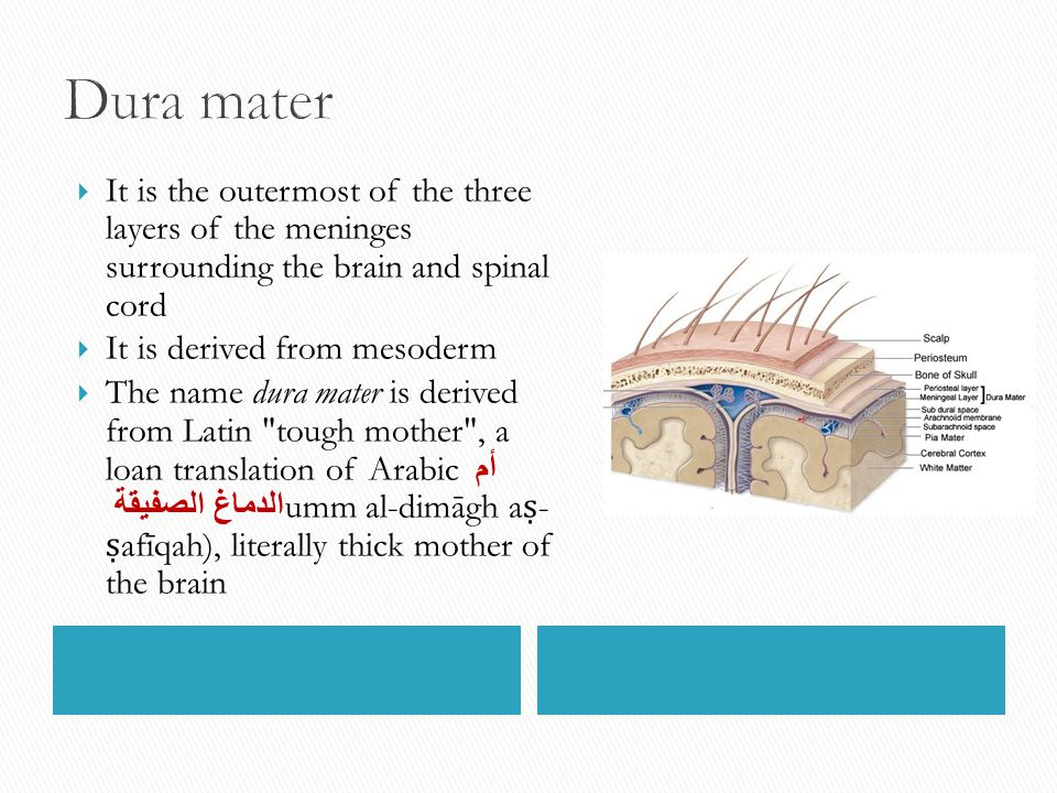 Dura mater It is the outermost of the three layers of the meninges surrounding the brain and spinal cord.