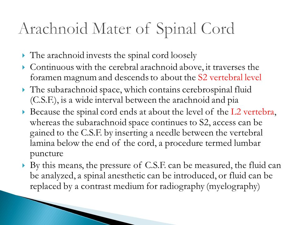 Arachnoid Mater of Spinal Cord