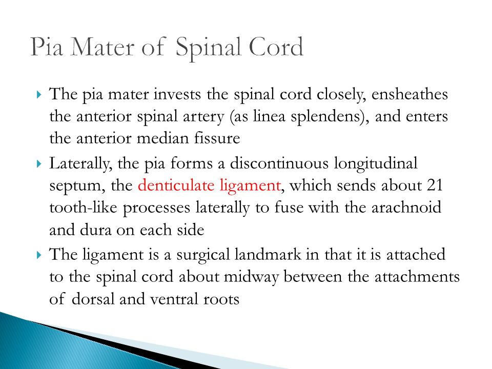 Pia Mater of Spinal Cord