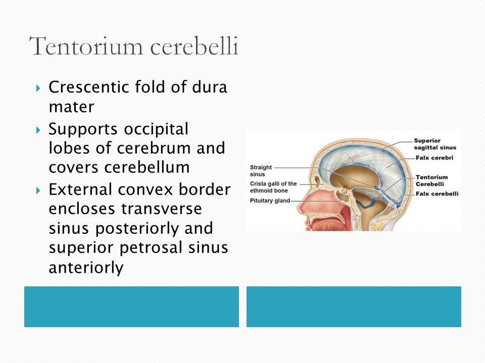 Tentorium cerebelli Crescentic fold of dura mater