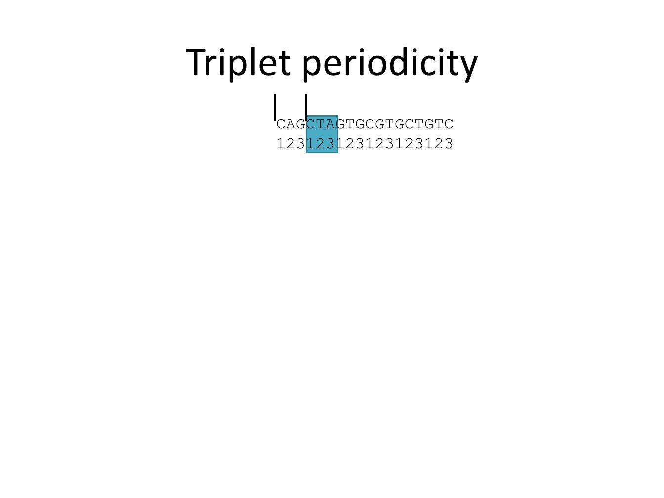 Triplet periodicity CAGCTAGTGCGTGCTGTC 123123123123123123