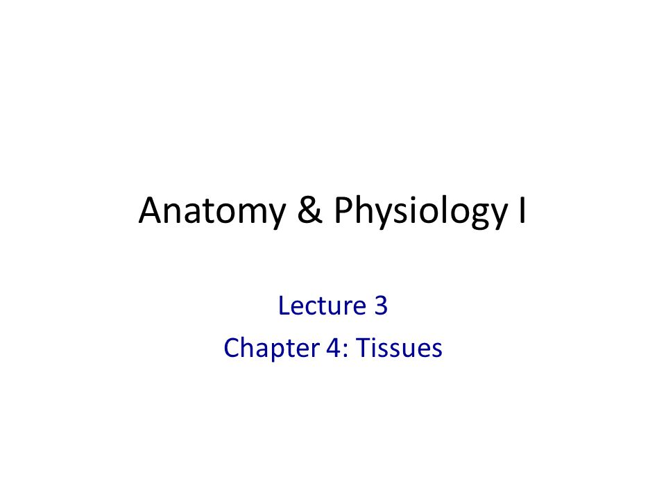 Lecture 3 Chapter 4: Tissues