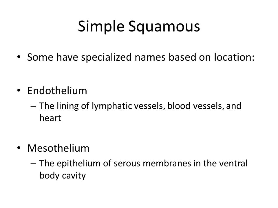 Simple Squamous Some have specialized names based on location: