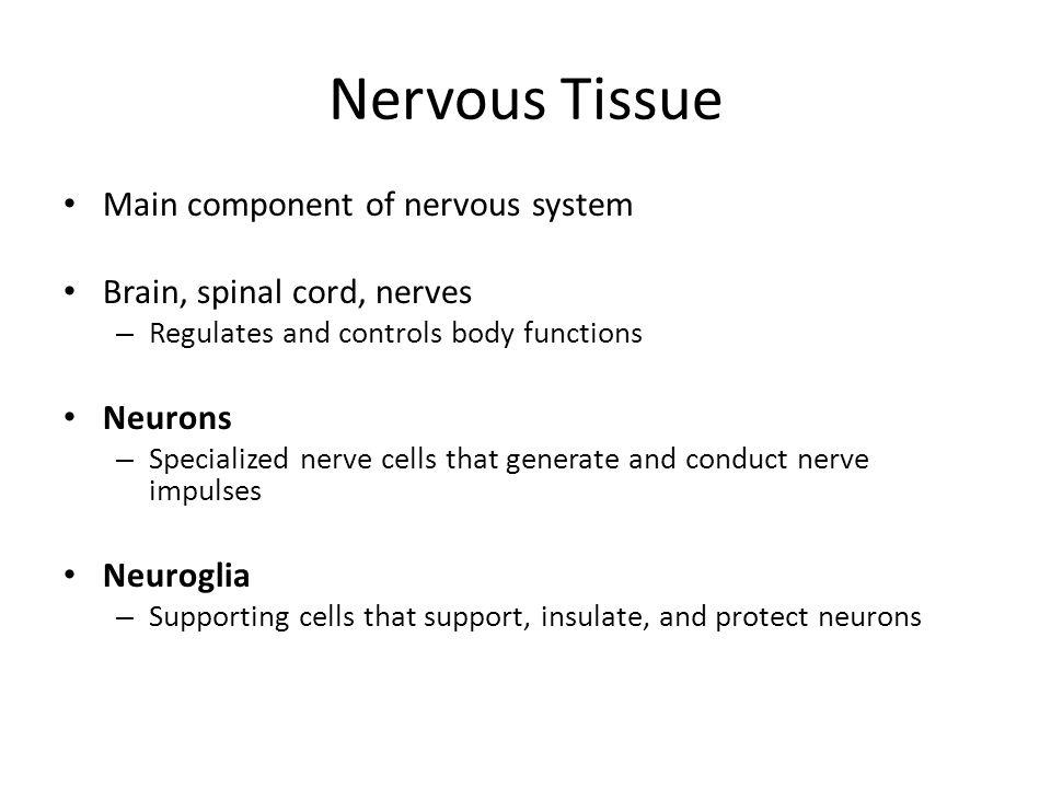 Nervous Tissue Main component of nervous system