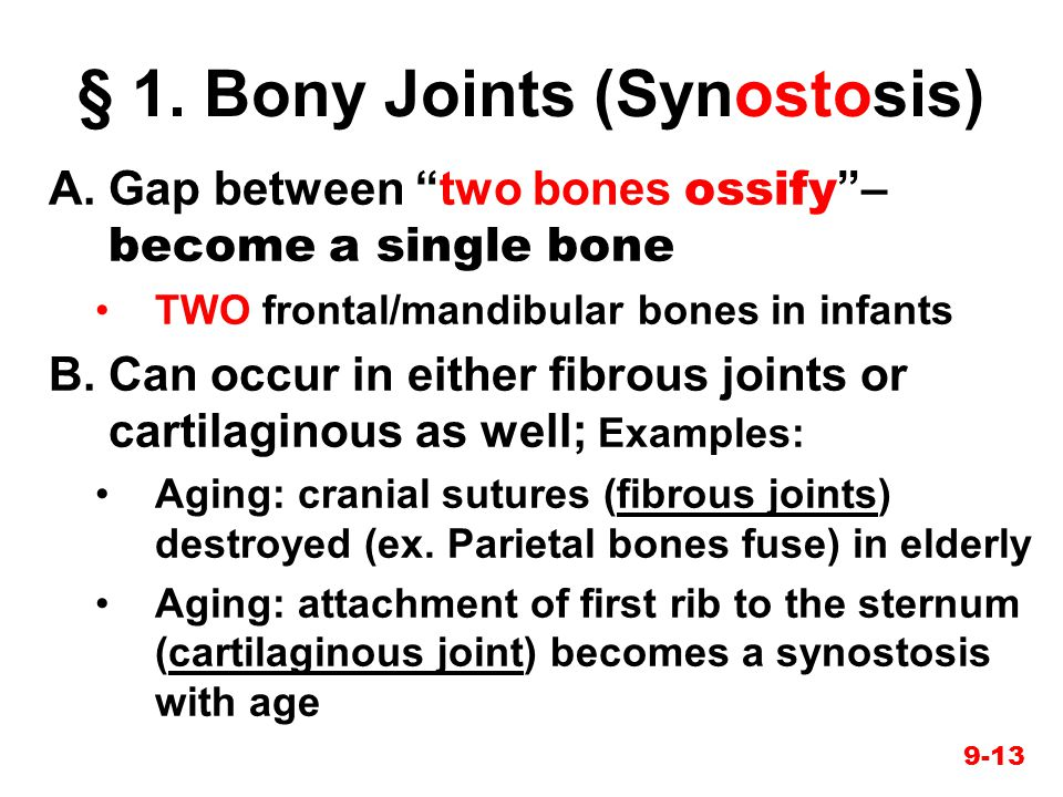 § 1. Bony Joints (Synostosis)