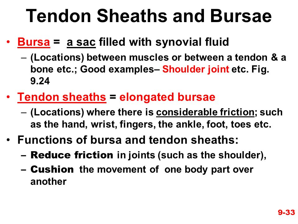 Tendon Sheaths and Bursae
