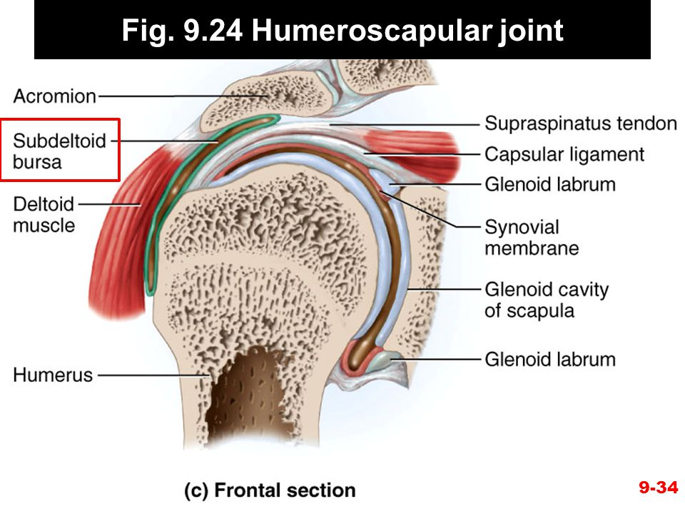 Fig. 9.24 Humeroscapular joint