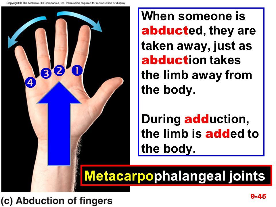     Metacarpophalangeal joints