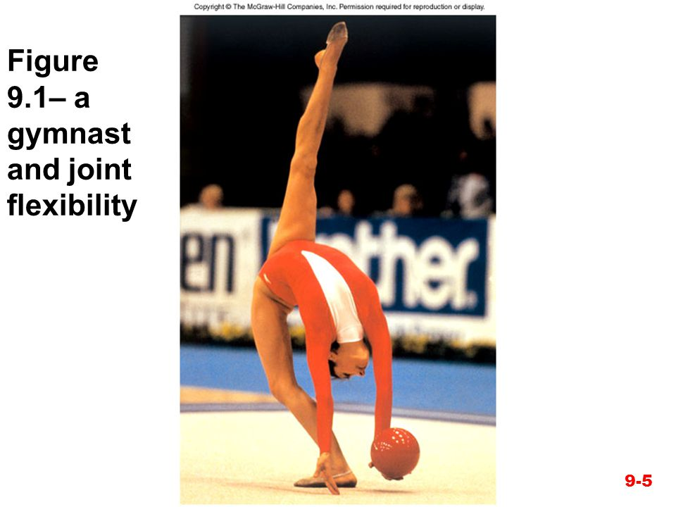 Figure 9.1– a gymnast and joint flexibility
