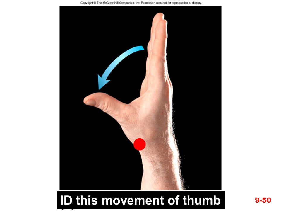 Figure 9.21d  ID this movement of thumb