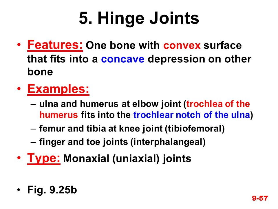 5. Hinge Joints Features: One bone with convex surface that fits into a concave depression on other bone.
