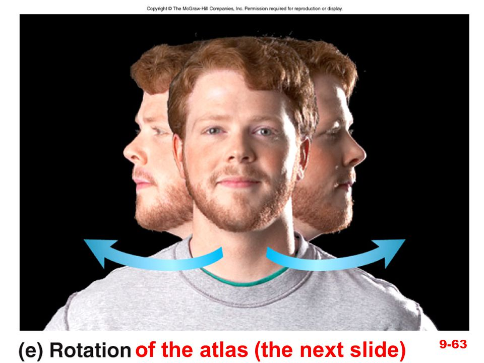 of the atlas (the next slide)