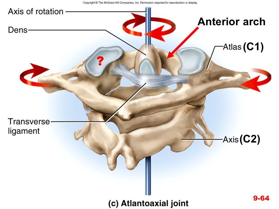 Anterior arch (C1) (C2)