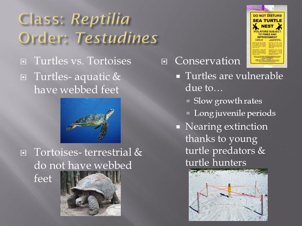 Class: Reptilia Order: Testudines