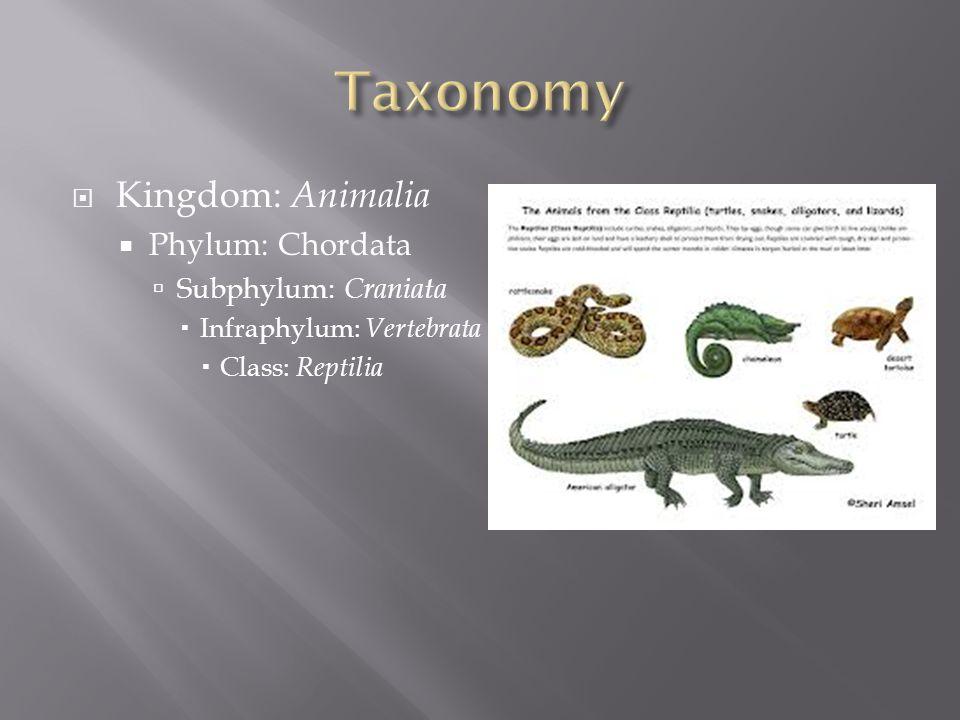 Taxonomy Kingdom: Animalia Phylum: Chordata Subphylum: Craniata