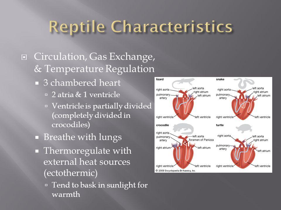 Reptile Characteristics