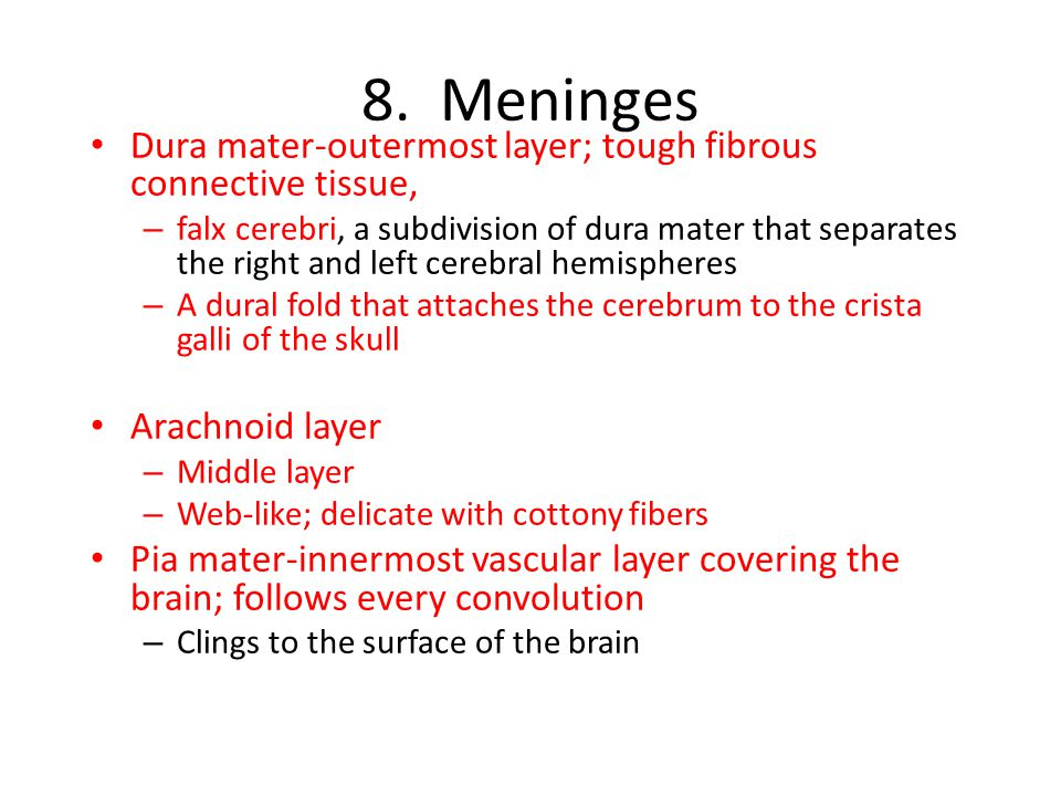 8. Meninges Dura mater-outermost layer; tough fibrous connective tissue,