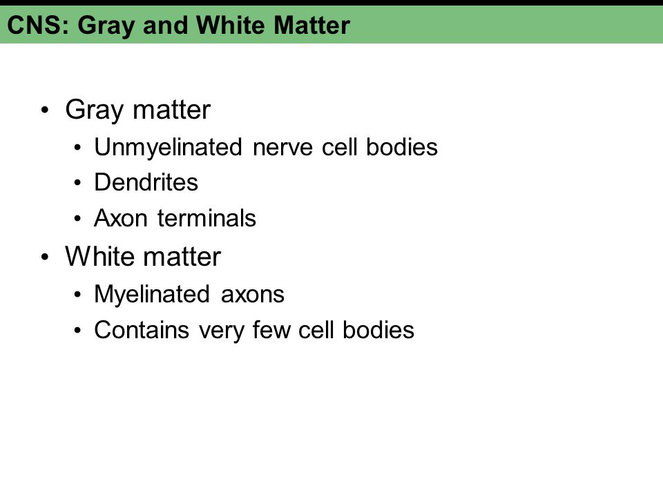 CNS: Gray and White Matter
