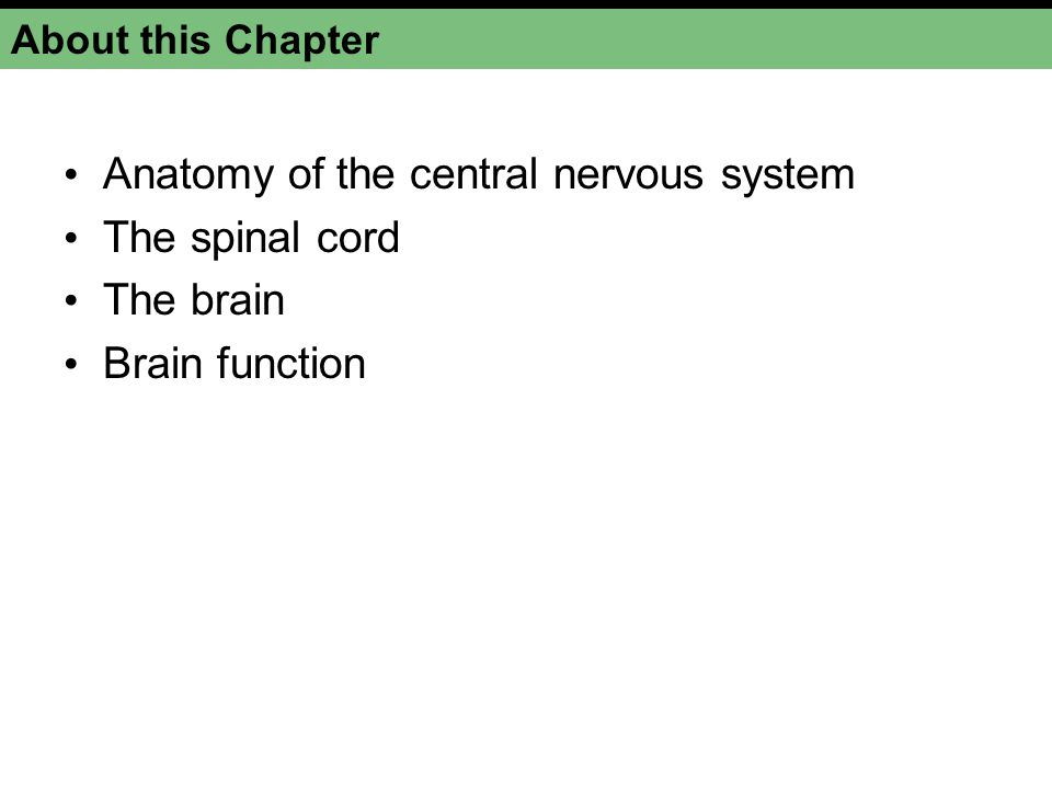Anatomy of the central nervous system The spinal cord The brain