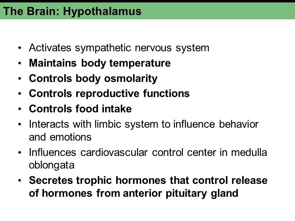 The Brain: Hypothalamus