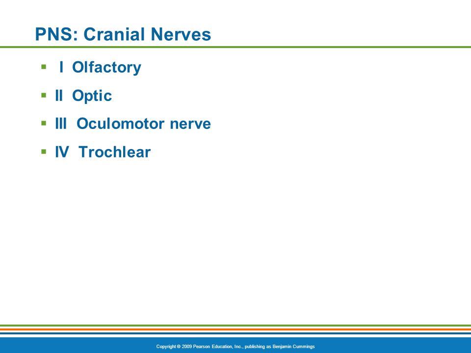 PNS: Cranial Nerves I Olfactory II Optic III Oculomotor nerve