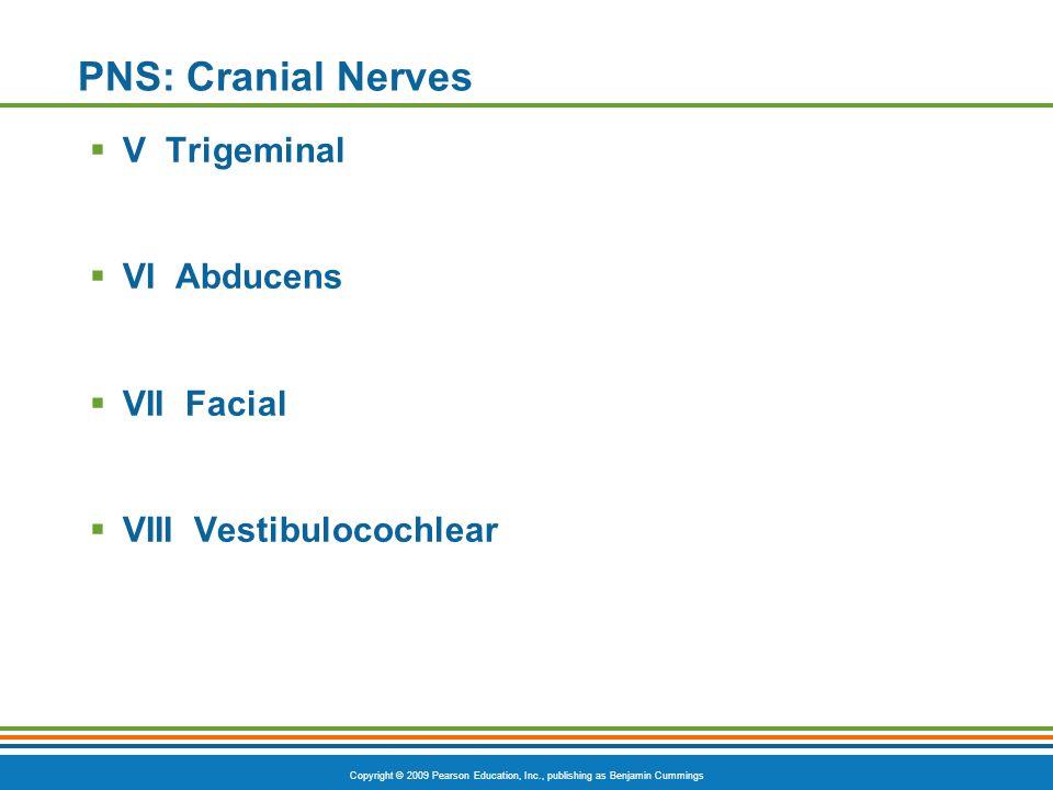 PNS: Cranial Nerves V Trigeminal VI Abducens VII Facial