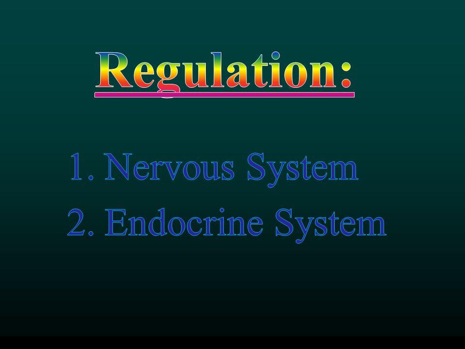 Nervous System Endocrine System
