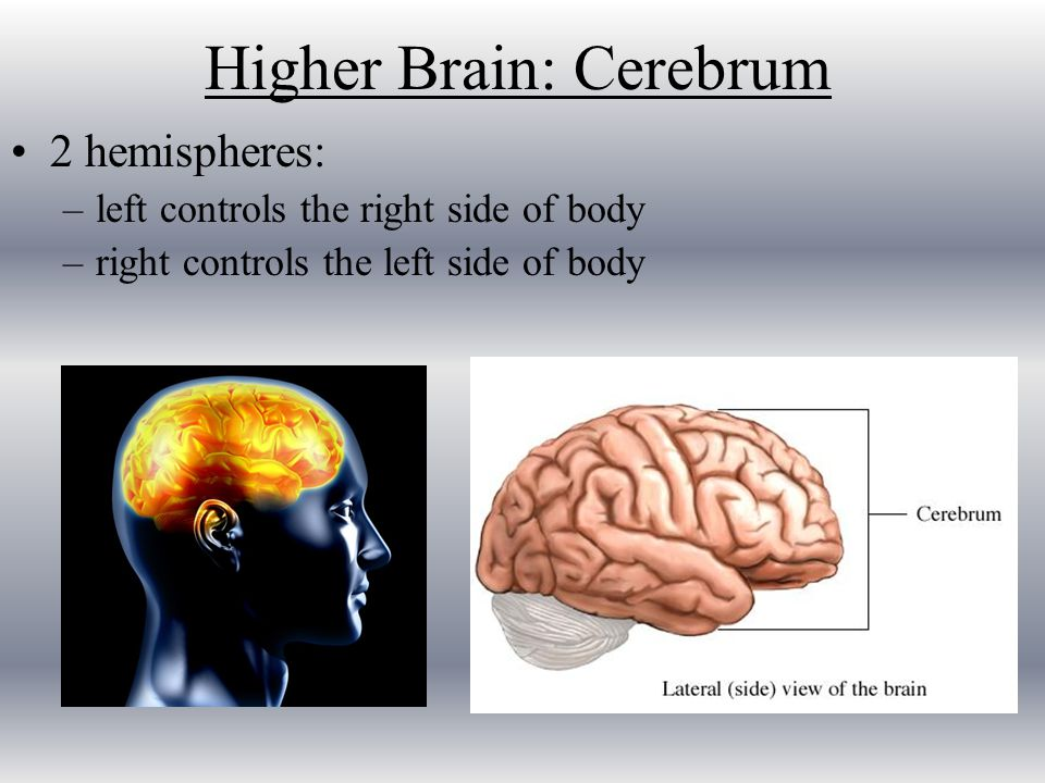 Remedies to increase brain power photo 1