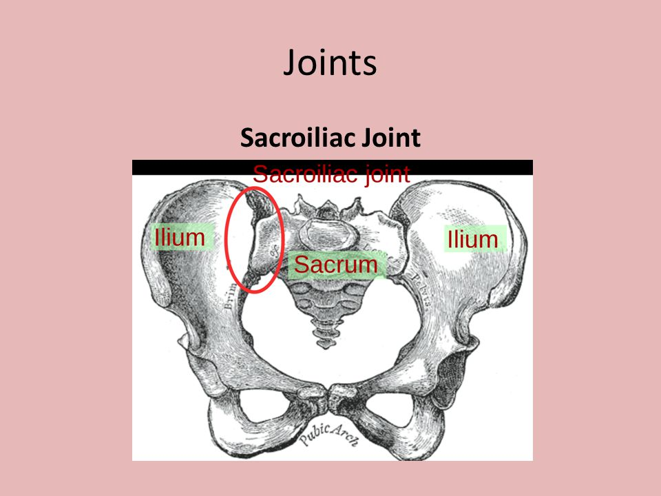 Joints Sacroiliac Joint
