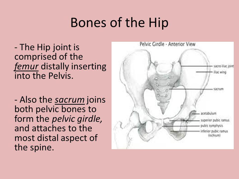 Bones of the Hip