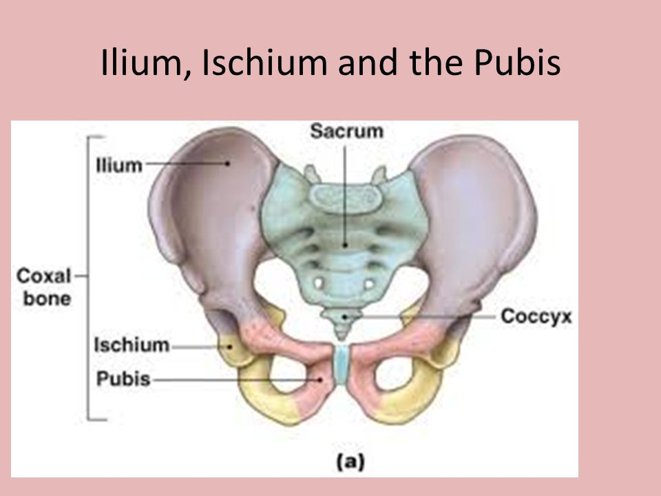 how to tell pubis from ischium