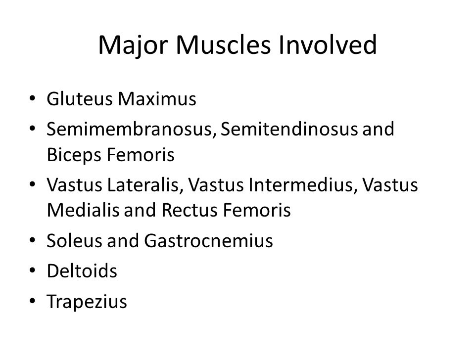 Major Muscles Involved