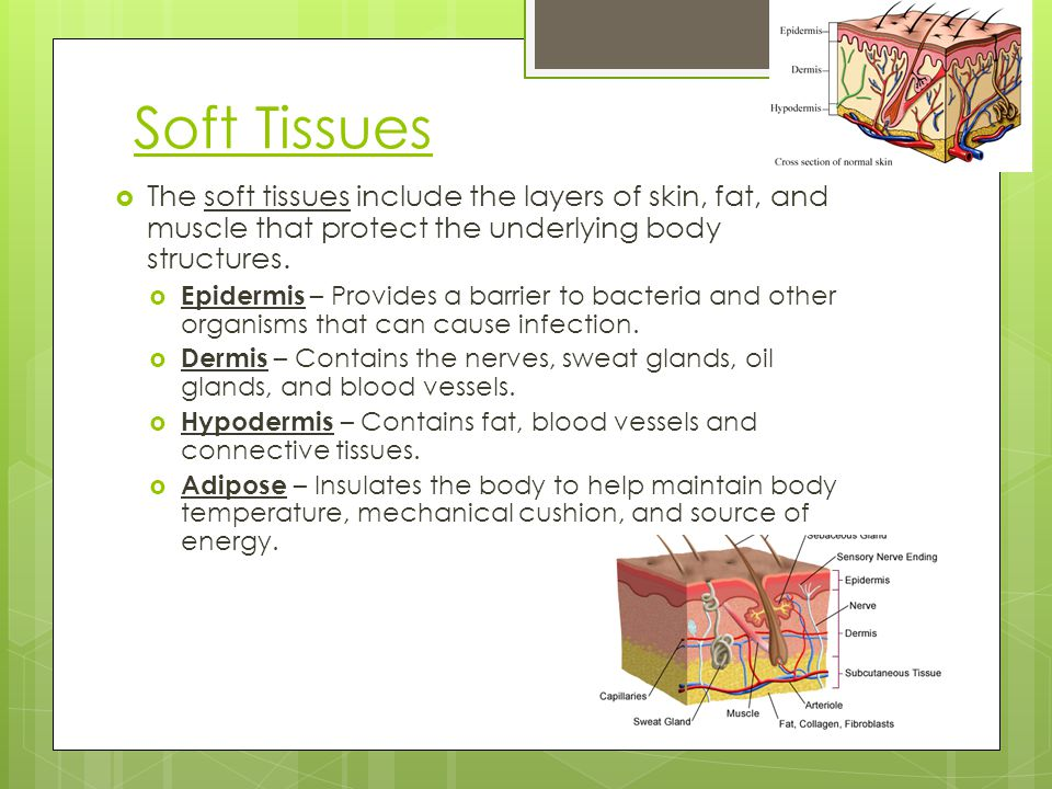 Soft Tissues The soft tissues include the layers of skin, fat, and muscle that protect the underlying body structures.