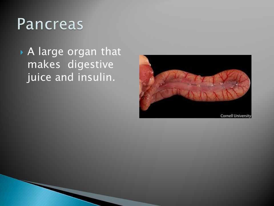 Pancreas A large organ that makes digestive juice and insulin.