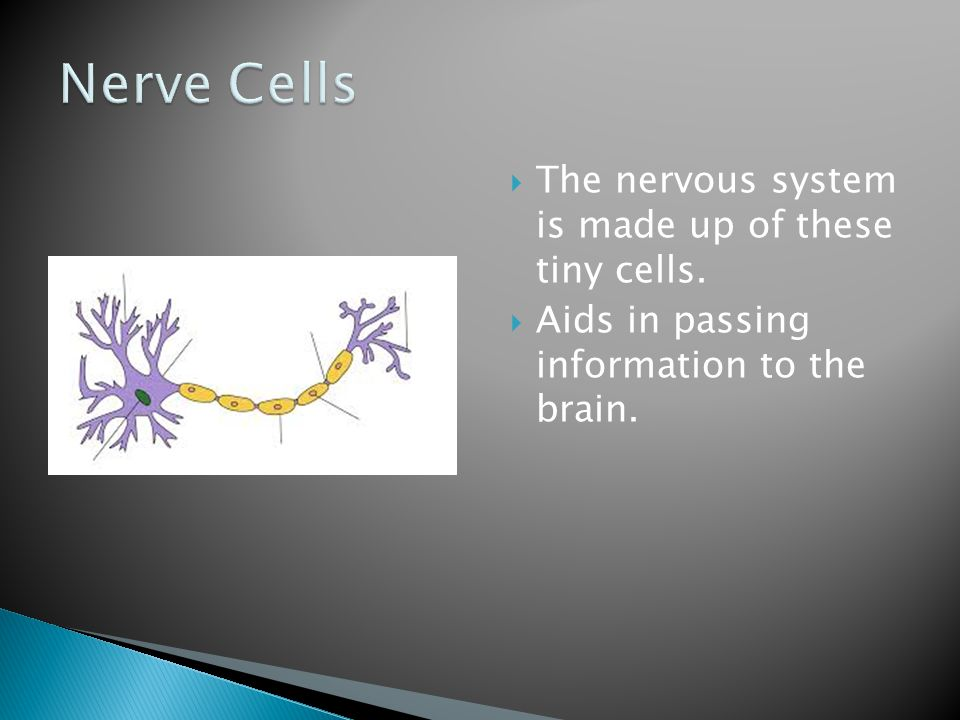 Nerve Cells The nervous system is made up of these tiny cells.
