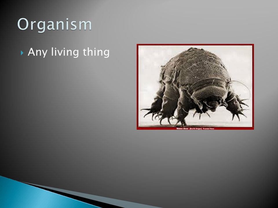 Organism Any living thing