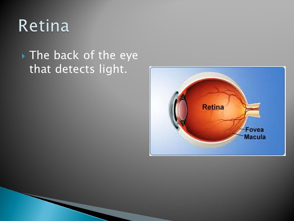 Retina The back of the eye that detects light.