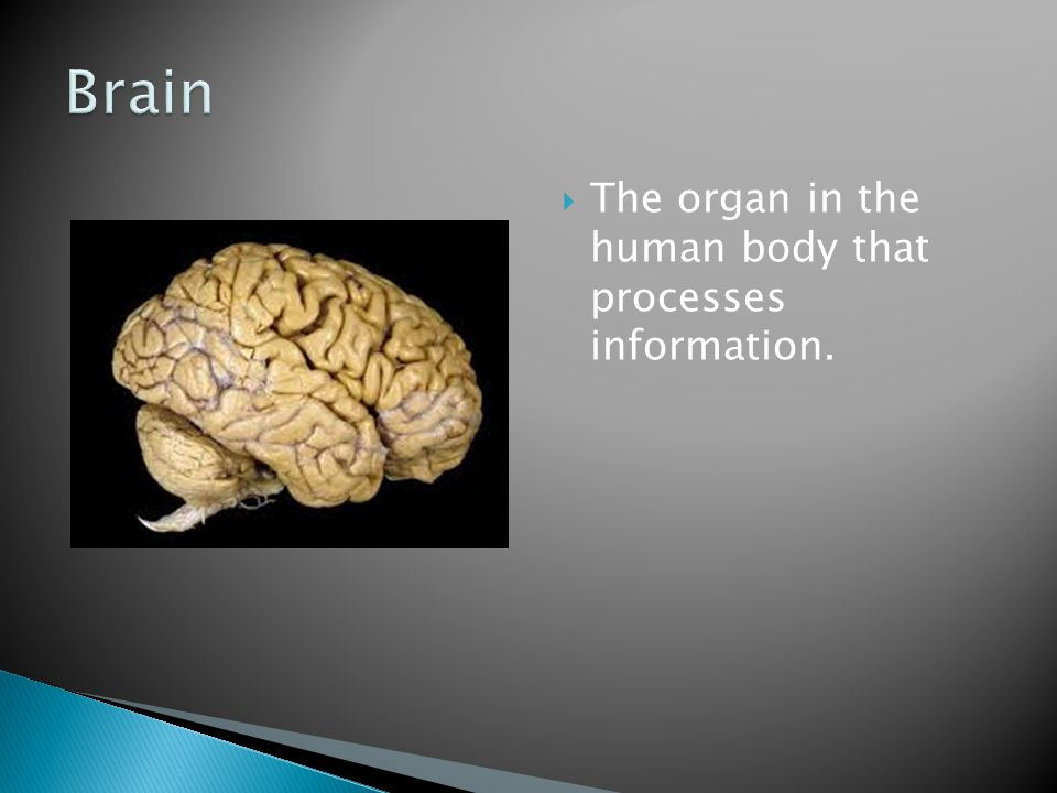 Brain The organ in the human body that processes information.