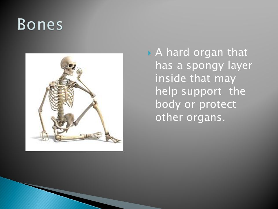 Bones A hard organ that has a spongy layer inside that may help support the body or protect other organs.