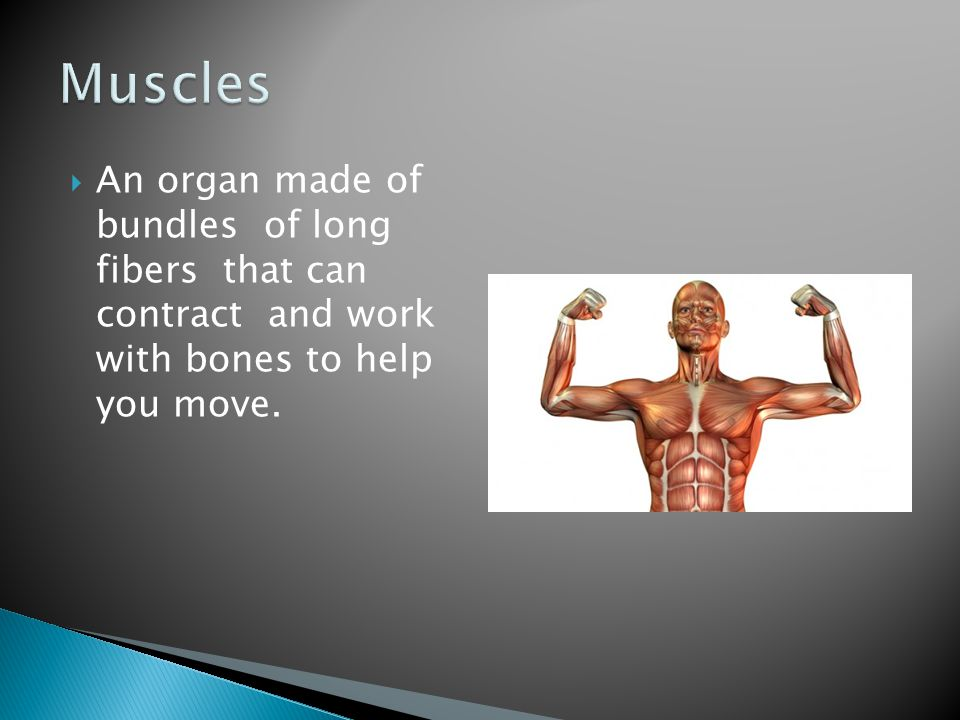 Muscles An organ made of bundles of long fibers that can contract and work with bones to help you move.