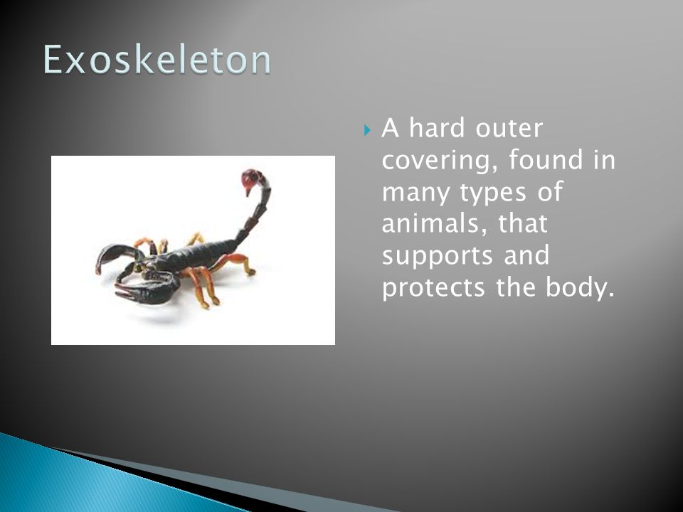 Exoskeleton A hard outer covering, found in many types of animals, that supports and protects the body.