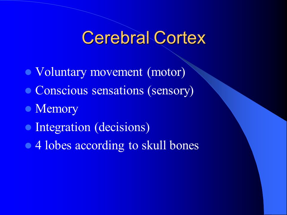 Cerebral Cortex Voluntary movement (motor)
